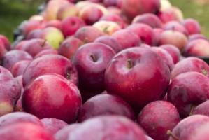 Analiza sadyogrody.pl: Niskie zapasy jabłek, a popyt i ceny nadal wysokie