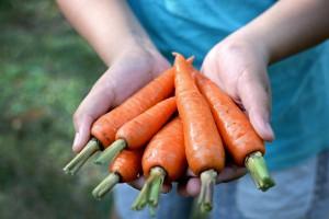 Mniejszy eksport warzyw świeżych i mrożonych
