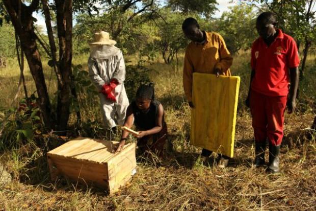 Społeczny miód z Zambii trafi do Polski
