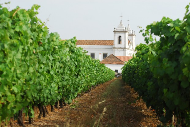 Portugalskie wino Tejo rośnie na polskim rynku