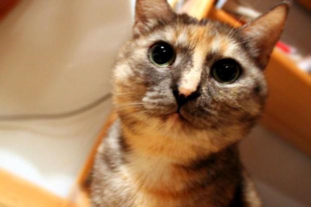 Weterynarze apelują do kotów: Nie zakłócajcie wyborów!