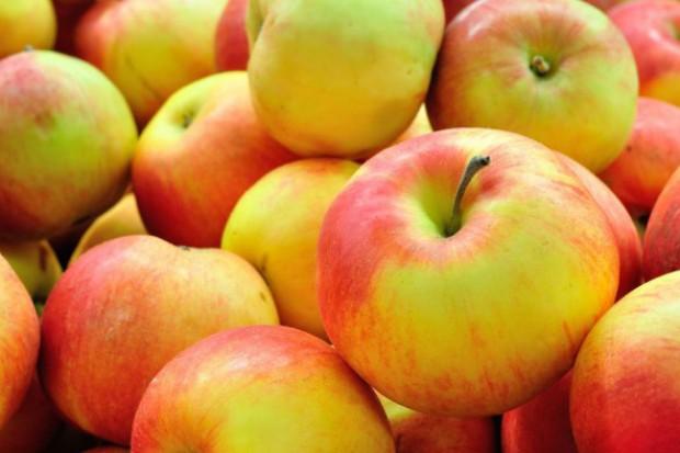 Polacy masowo importują jabłka z Europy Zachodniej?