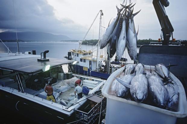 Większe połowy ryb na Bałtyku