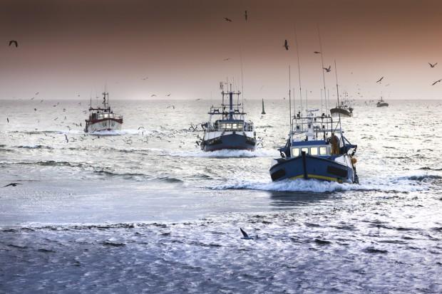 Spadła produkcja ryb i przetworów rybnych