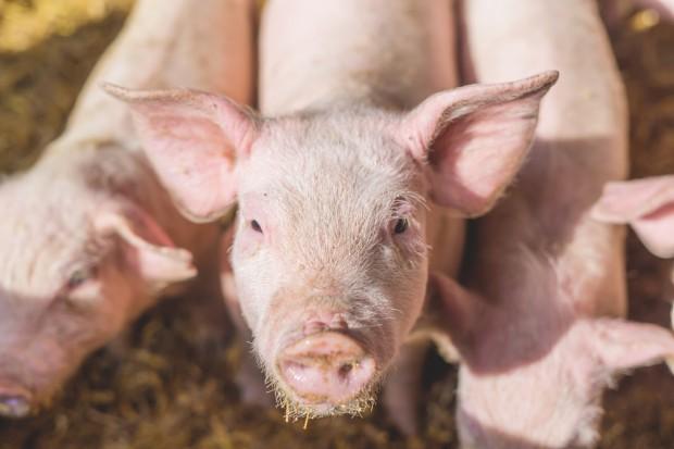 W przyszłości handel mięsem sprowadzi się do handlu wodą