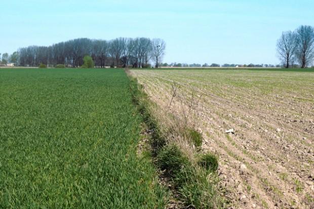 Masowy wykup ziemi jest problemem w Europie