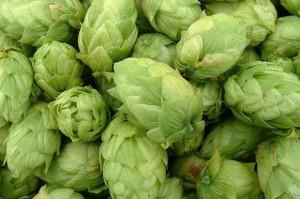 Palikot krytykuje duże browary za brak chmielu w ich piwie