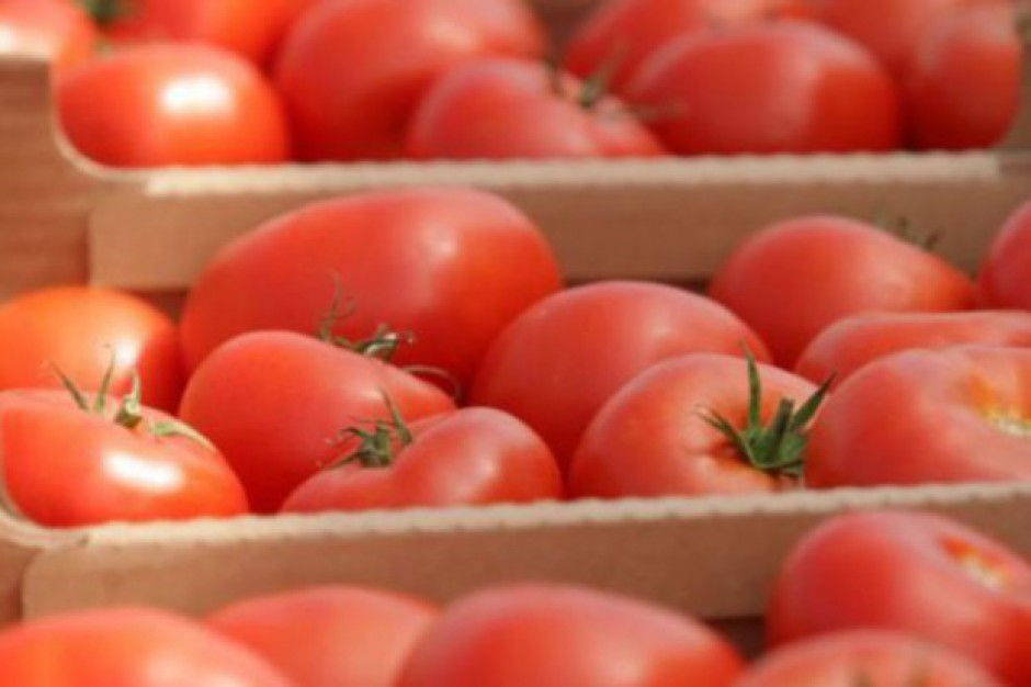Niskie ceny pomidorów i ogórków szklarniowych