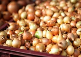 Wzrósł import cebuli do Rosji - mimo embarga