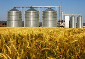 Rosną ceny zbóż. Zła pogoda nie sprzyja uprawom