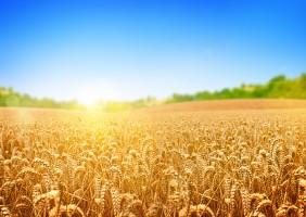 UE będzie traciłą swoją pozycję na światowym rynku zbóż