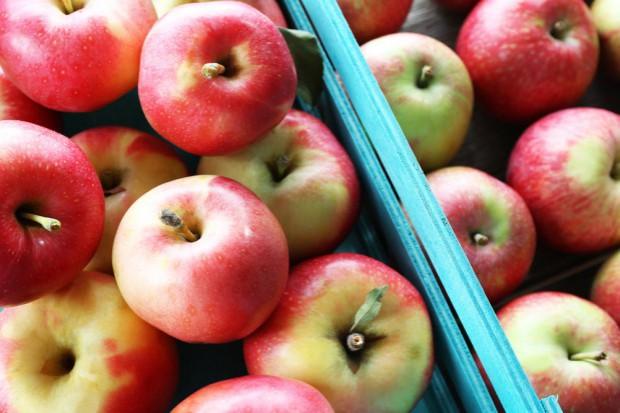 Prof. Makosz: Rosja jest skazana na polskie jabłka