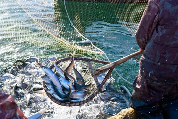 Nowela ustawy o organizacji rynku rybnego ponownie w komisji