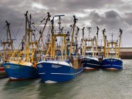 Wysoki wzrost połowów na Bałtyku