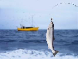 Rośnie wartość eksportu polskiego sektora rybnego