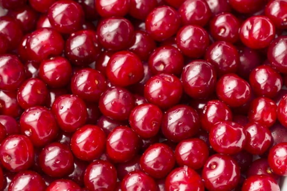 Spadają ceny wiśni na rynkach hurtowych