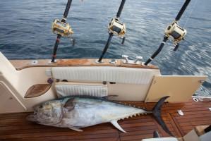 Rekordowy import ryb świeżych