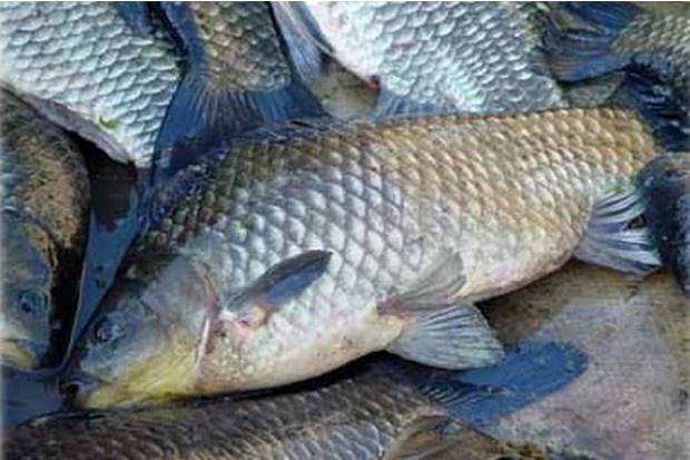 Senat  poparł ustawę o organizacji rynku rybnego bez poprawek