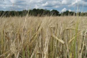 Ustawa o kształtowaniu ustroju rolnego z poprawkami