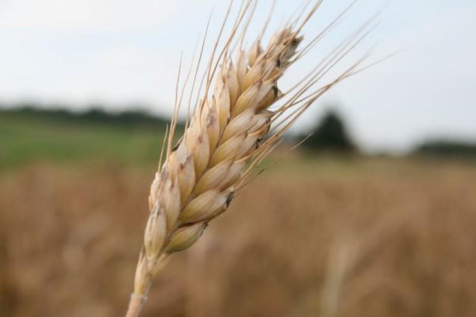 Ceny zbóż powoli rosną