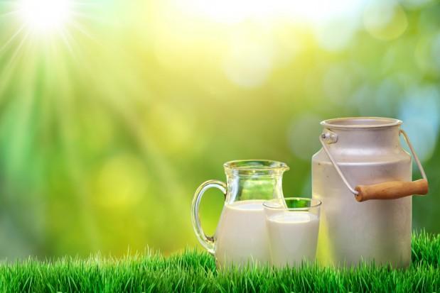 Wysoka dynamika skupu mleka po zniesieniu kwotowania