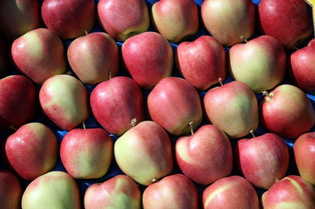 Polska o 1/3 zwiększyła eksport jabłek w okresie lipiec '14 - kwiecień '15