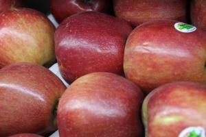 Zbiory jabłek będą wysokie