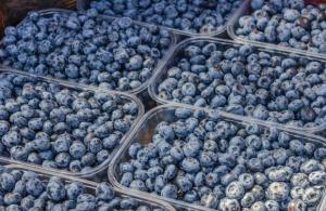 Borówki na rynkach hurtowych kosztują 10-17 zł/kg