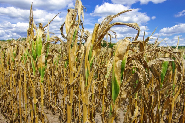 PSL chce uruchomienia rezerwy kryzysowej w związku z suszą