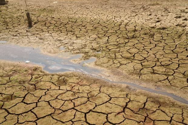 Klęska głodu na świecie realna.Przez ocieplenie klimatu
