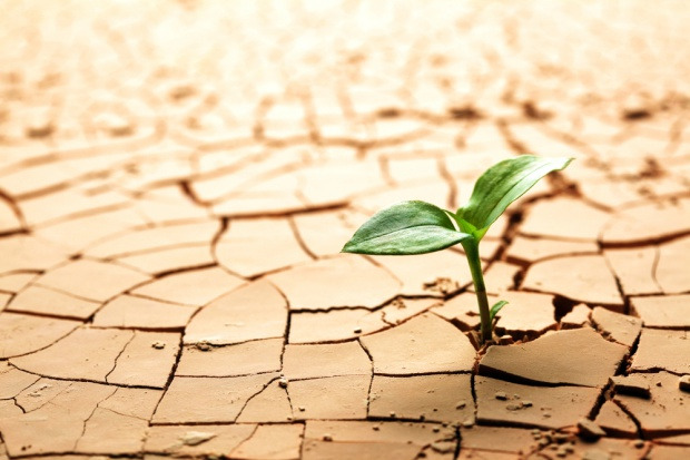 Przemysł spożywczy i rolnictwo muszą być gotowe na trudne lata. Rośnie liczba katastrof pogodowych na świecie