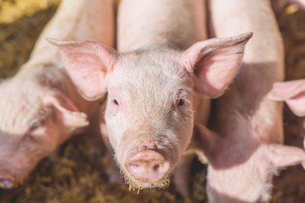 Rosjanie narzekają na deficyt mięsa
