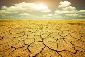 Największe zagrożenie suszą w Polsce występuje dla roślin strączkowych