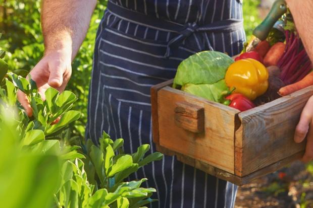 Sprzedaż produktów rolnych na podstawie umowy! Prezydent podpisał ustawę