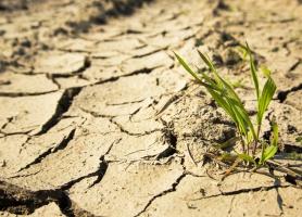 7 września decyzja KE ws. pomocy dla polskich rolników