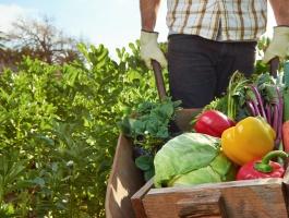Polacy wśród liderów produkcji żywności organicznej w UE
