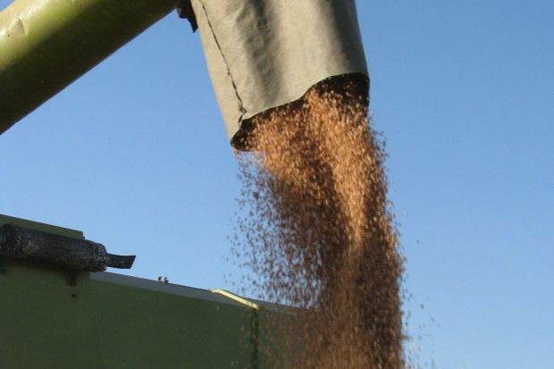 Plon pszenicy w Łódzkiem nieco gorszy niż rok temu