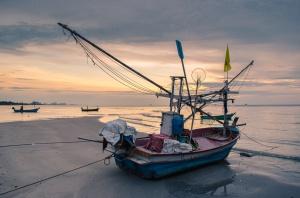 Połowy ryb na Bałtyku wyższe o 8,7 proc.