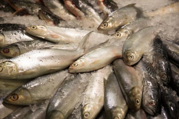 W pierwszym półroczu wzrosła produkcja ryb i owoców morza