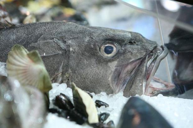 Połowy ryb na Bałtyku coraz większe