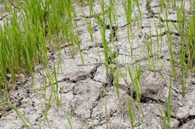 Opady zmniejszyły skalę suszy