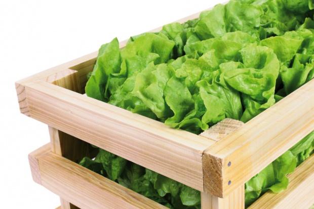 Green Factory: Dla polskich konsumentów ważna jest czysta etykieta