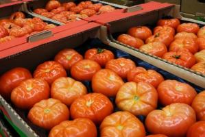 Hiszpania czołowym eksporterem pomidorów do UE