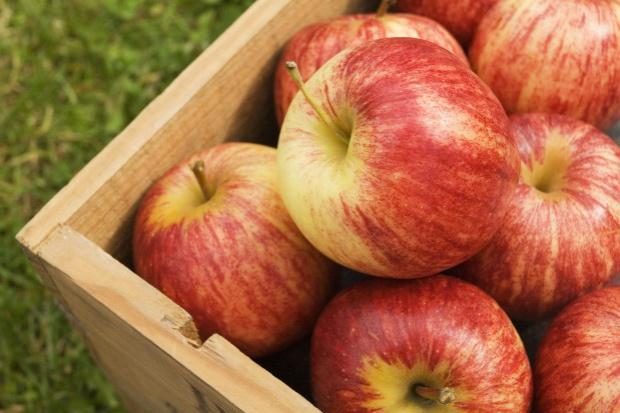 Polskie jabłka coraz bliżej chińskiego rynku