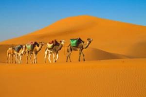 Eksport do Algierii można ułatwić