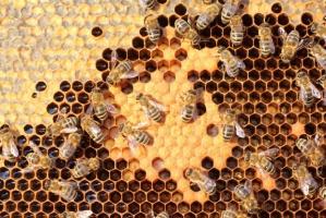 Współpraca rolników i pszczelarzy nagrodzona