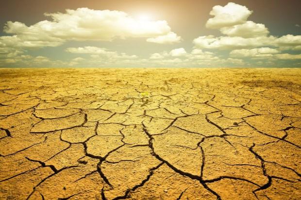 Mimo opadów susza w Polsce nie odpuszcza