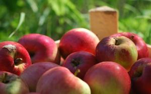 Amerykańska młodzież uwielbia jabłka
