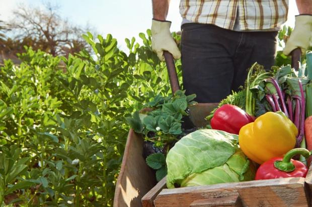 Coraz więcej żywności ekologicznej w sklepach w Polsce