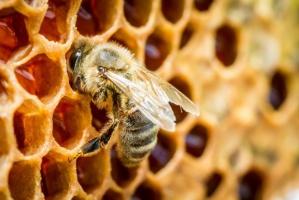 Udany sezon pszczelarzy. Nawet 30 kg miodu z ula